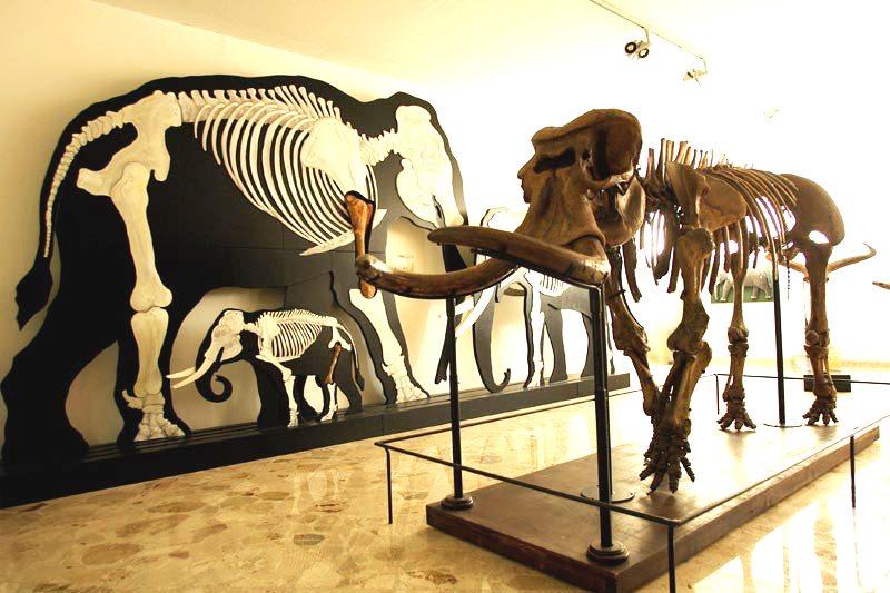Museo di Paleontologia e Geologia Giorgio Gemmellaro di Palermo